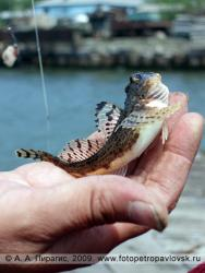 Прикрепленное изображение rybalka akros 2