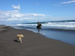 Конные прогулки по берегу Тихого океана