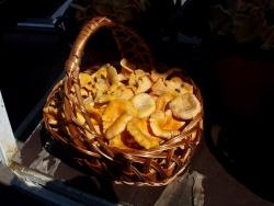 Грибы лисички на рынке